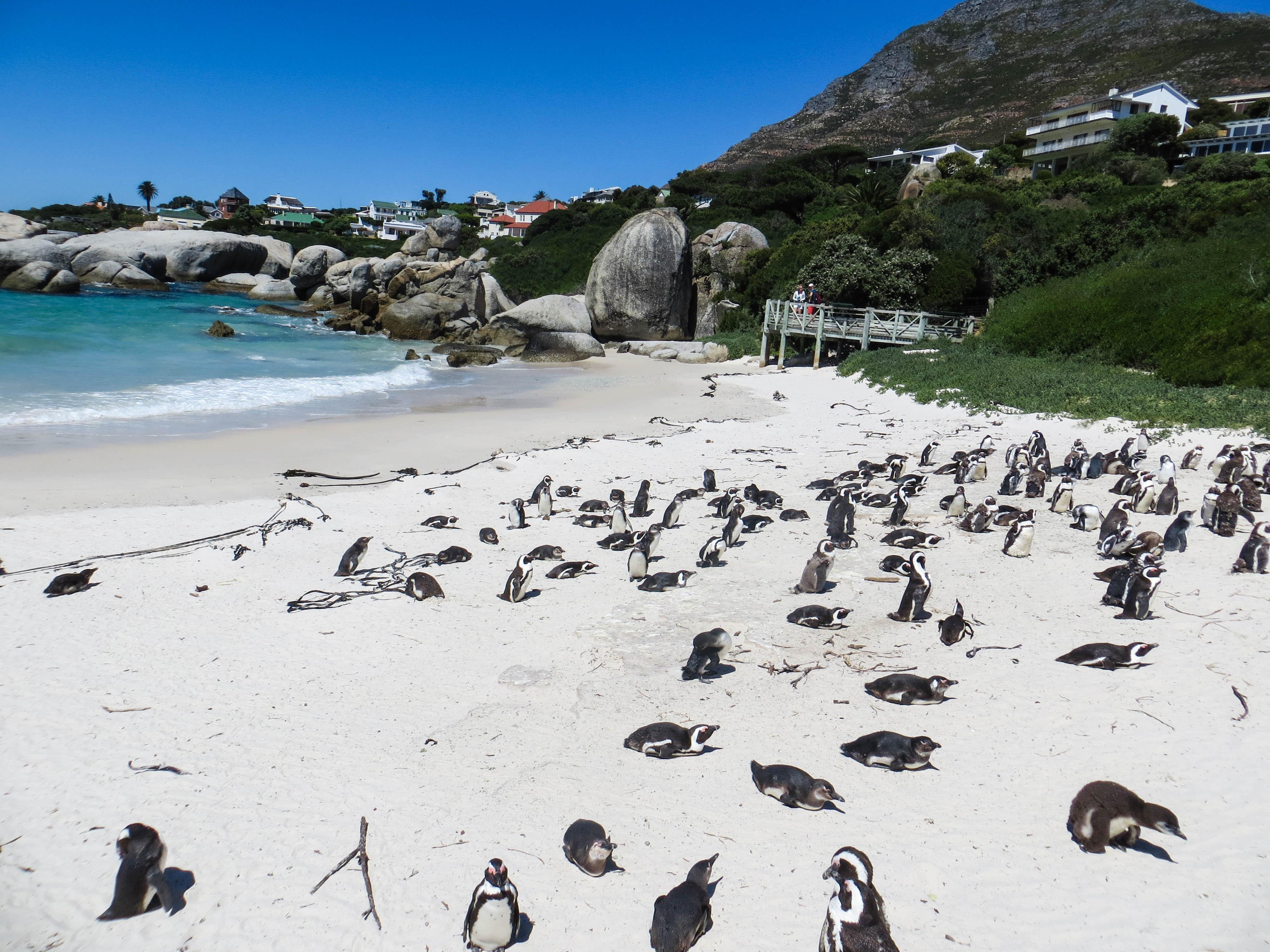 Cape Peninsula - Tausha Cowan