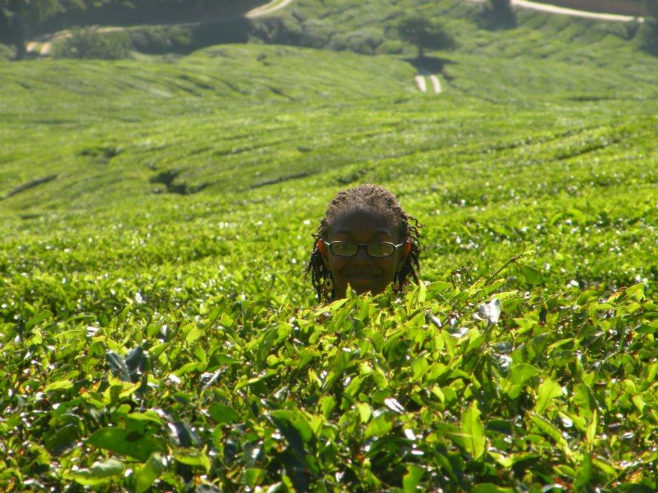 Tea Fields, Cameron Highlands, Maylasia